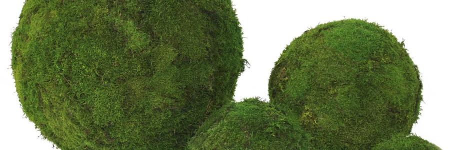 Plantas Liofilizadas Preservadas Jardines Verticales